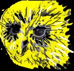 Žuta-sova