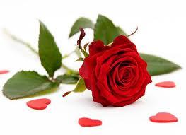 Jedna ruža...