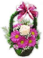 Cveće,cveće,cveće...