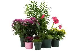 Saksijsko cveće će duže trajati...