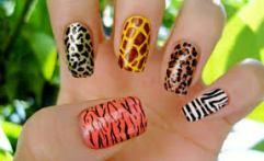 Animal i na noktima